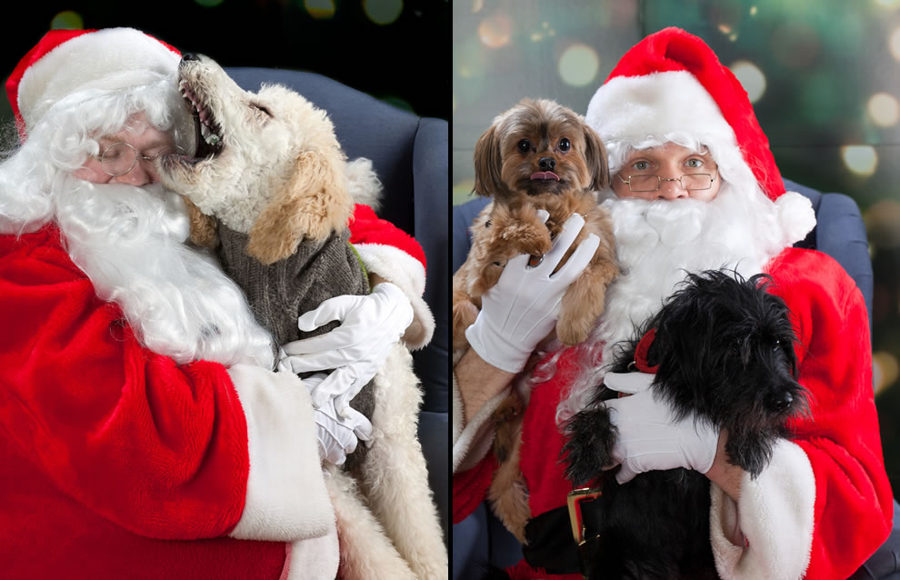 Santa listening to wishes of dogs both naughty and nice