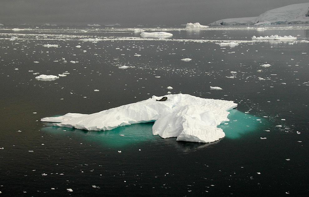 Seal on an iceberg at Gerlache strait