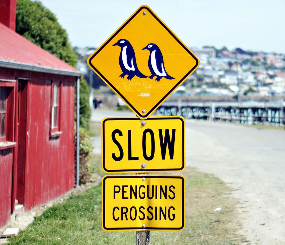 Slow Penguins Crossing