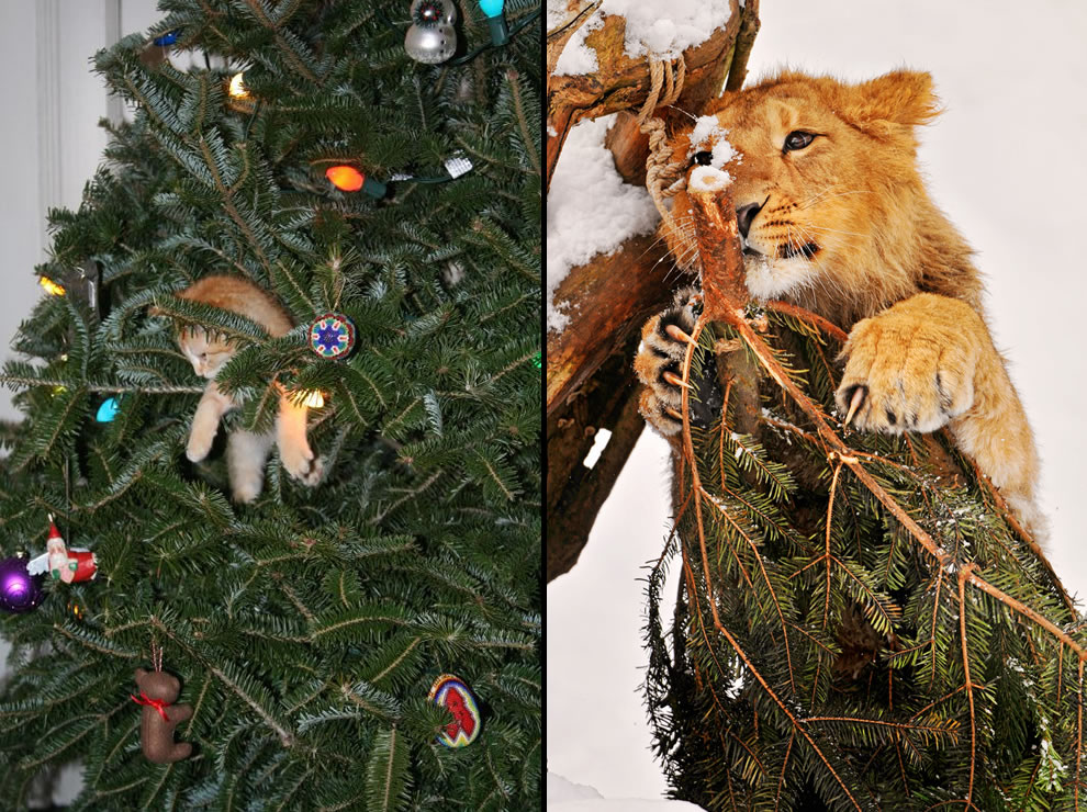 Tiny kitten in a tree and lion on a Christmas tree