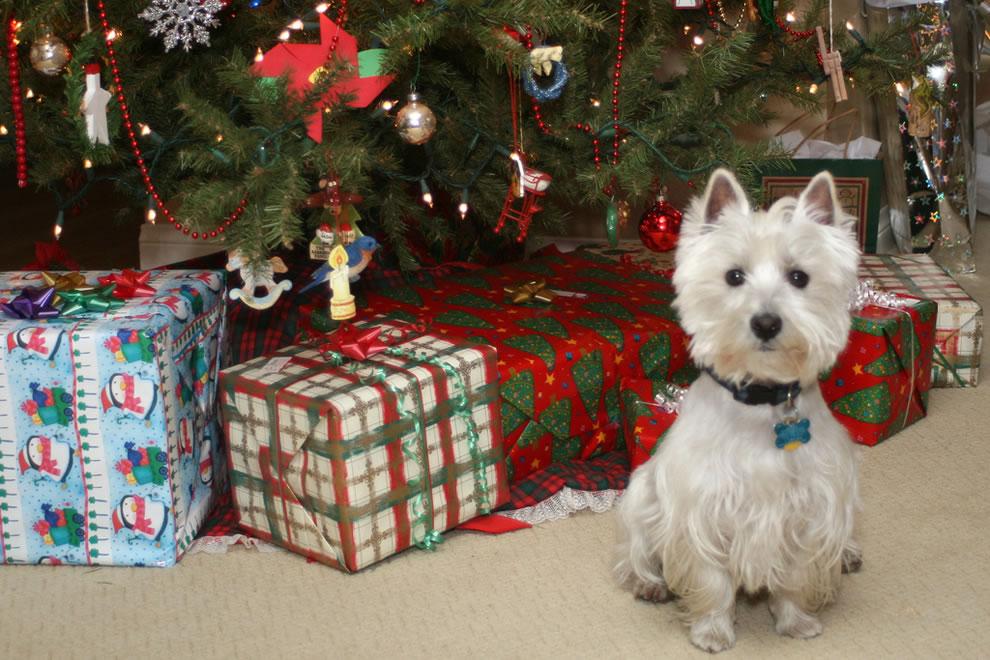 Wee Westie Christmas