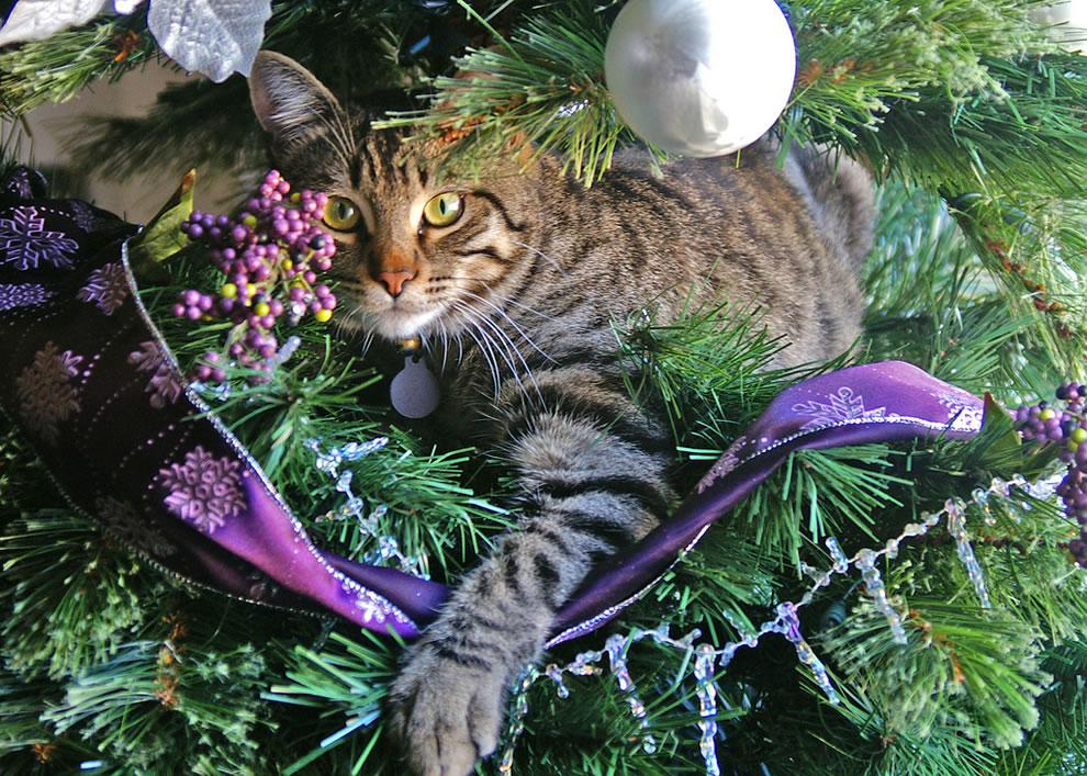 We've got a rather unique tree ornament