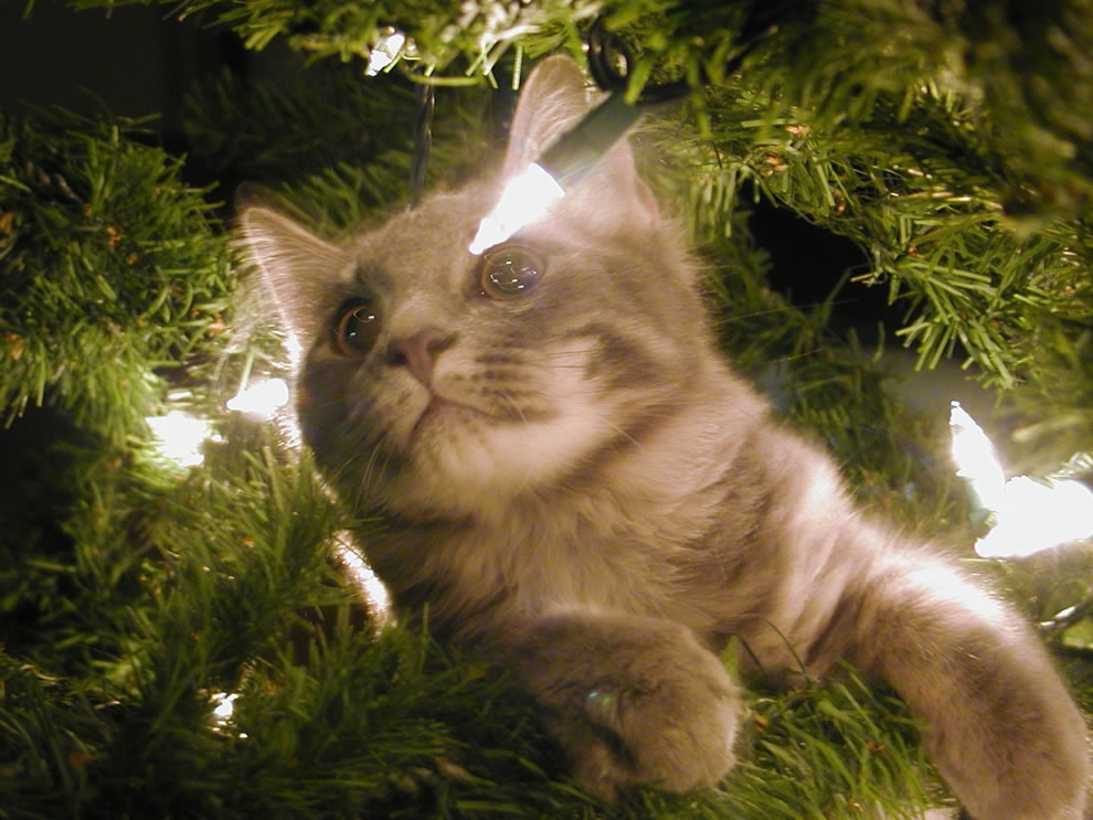 On Buster's first Christmas he totally demolished the Christmas tree