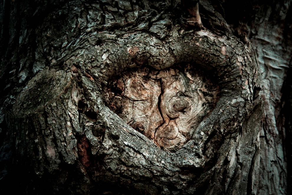 A tree's heart exposed