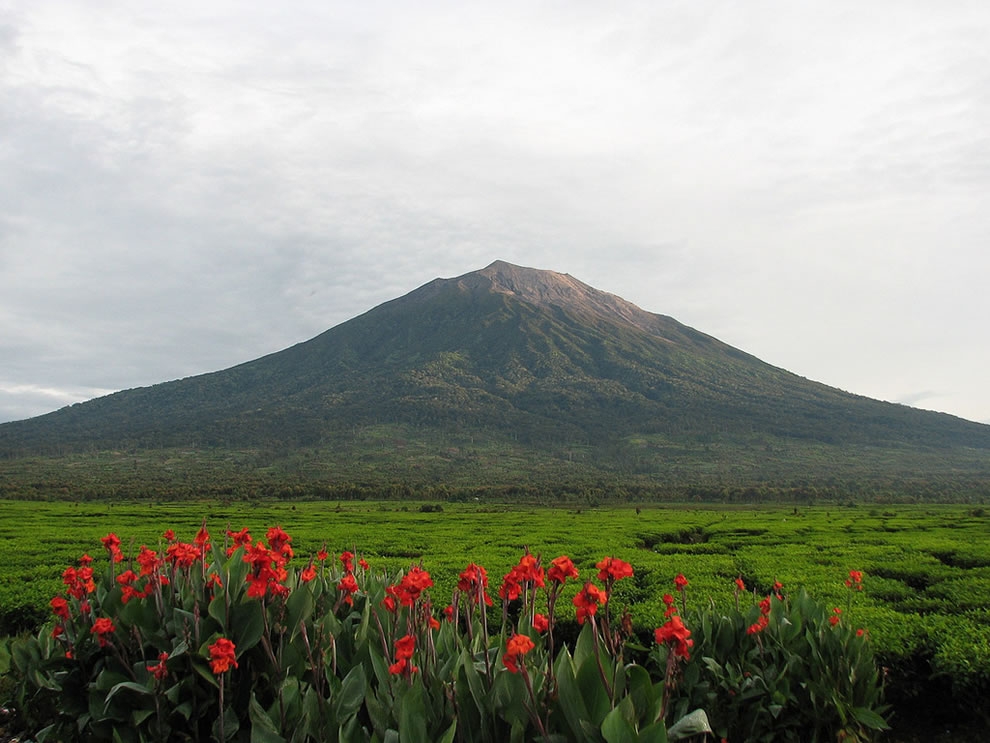 At 12,484 ft (3,805 m), Mount Kerinci is the highest volcano in Indonesia, and the highest peak on the island of Sumatra.