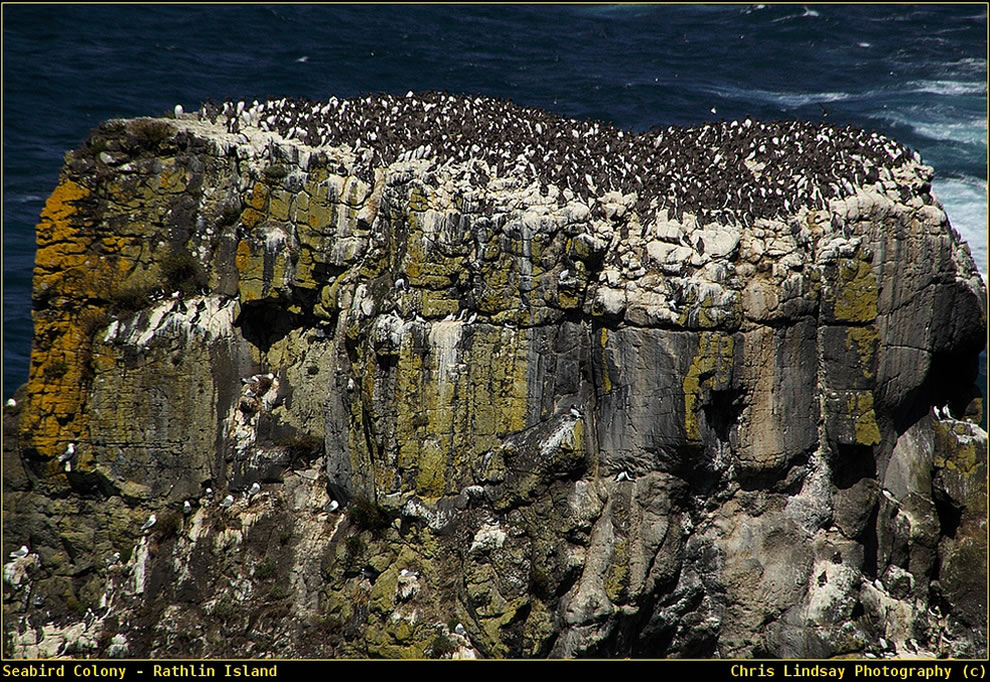 At the heart of the seabird Colony