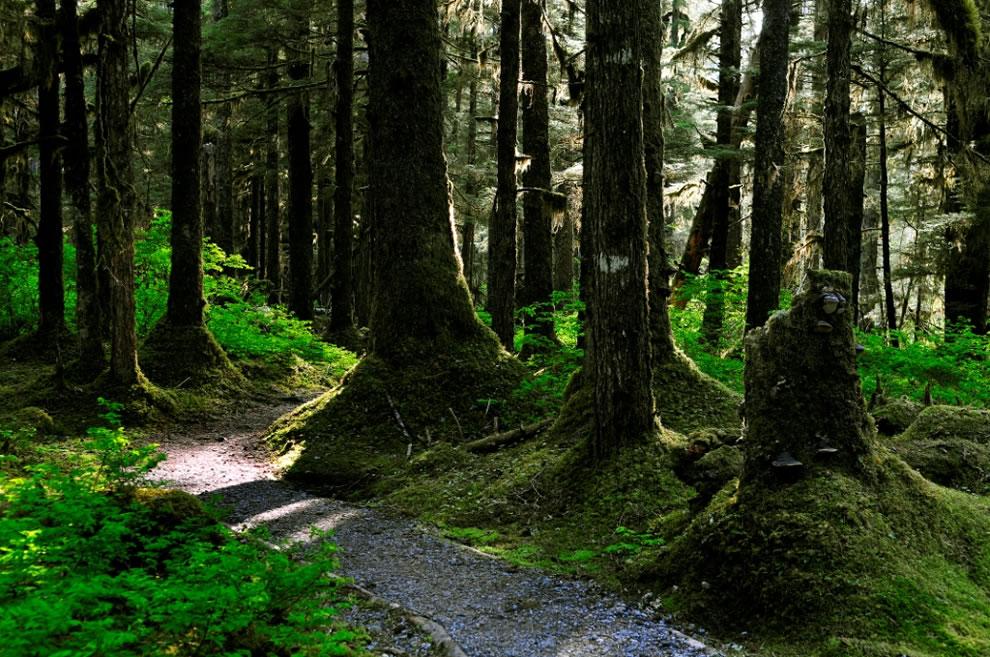 Bartlett Cove forest, Alaska Glacier National Park & Preserve