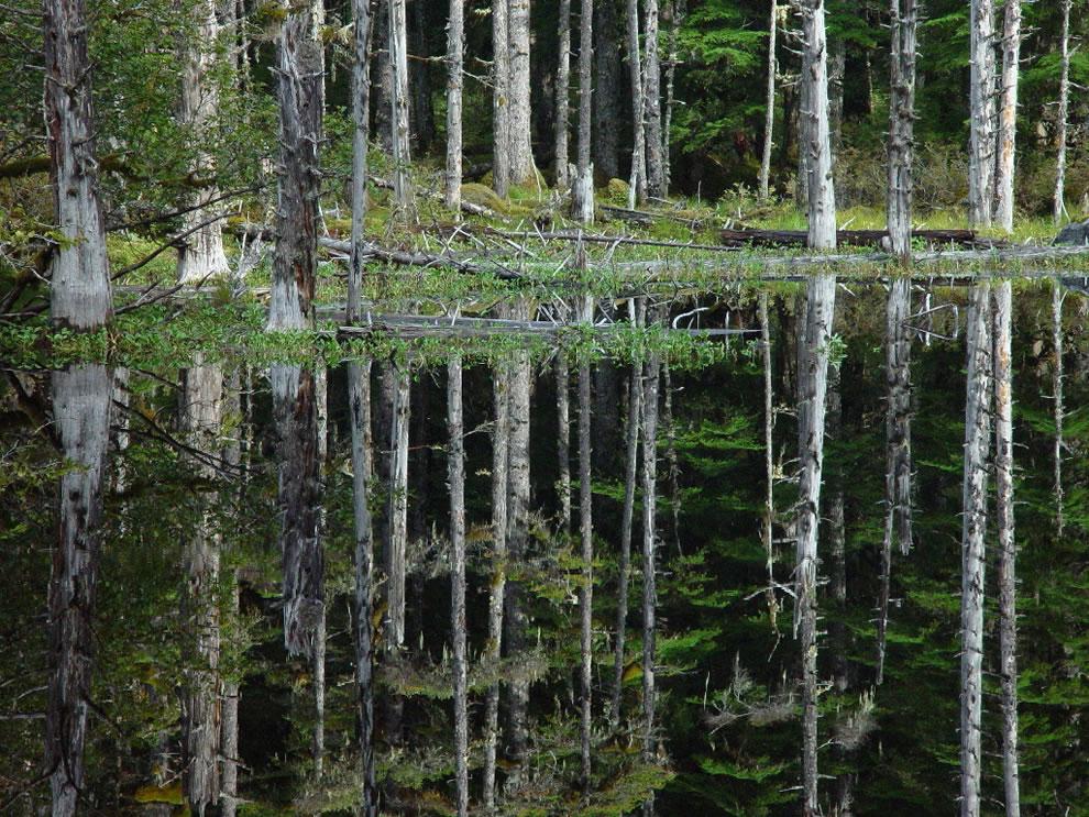 Blackwater Pond Reflection, Glacier Bay National Park & Preserve