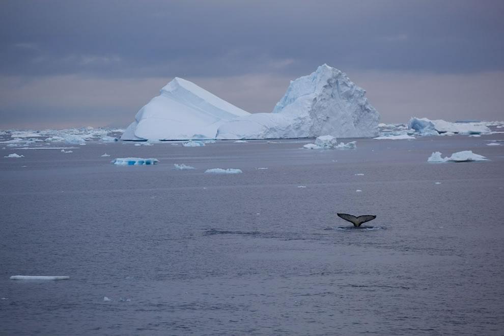 Fluke and iceberg