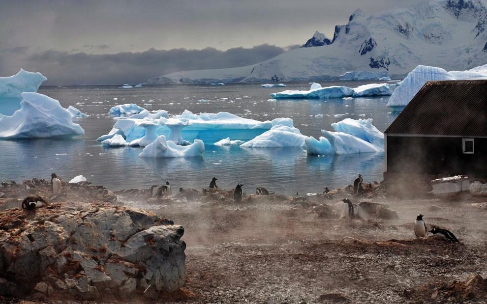 Icebergs Antarctica White Blocks Coast Penguins Fog Lodge