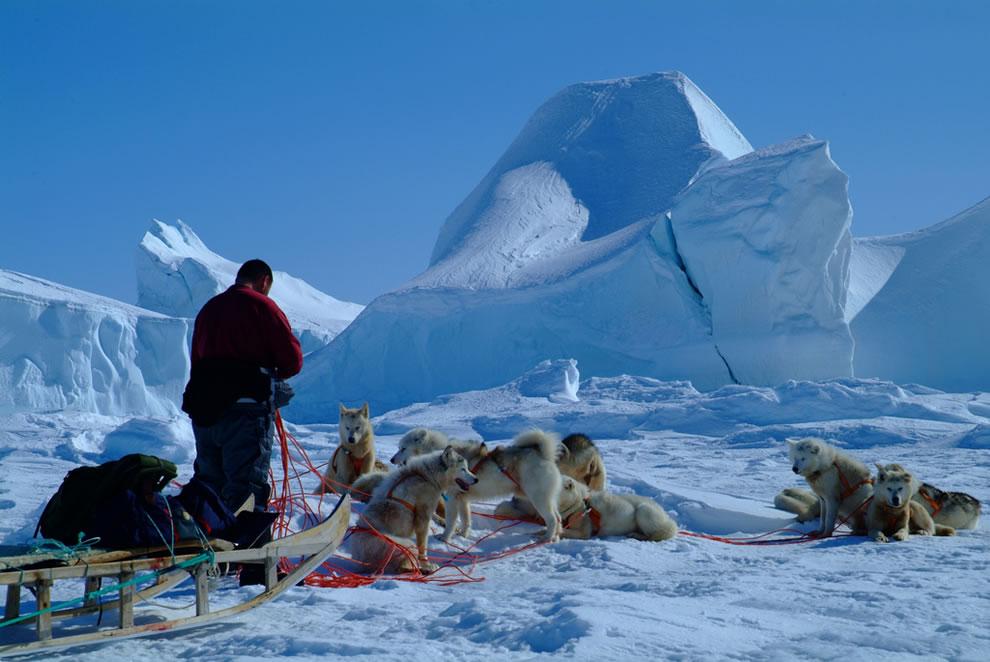 Icebergs by dog sled