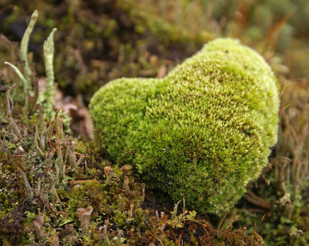 Nature's mossy heart