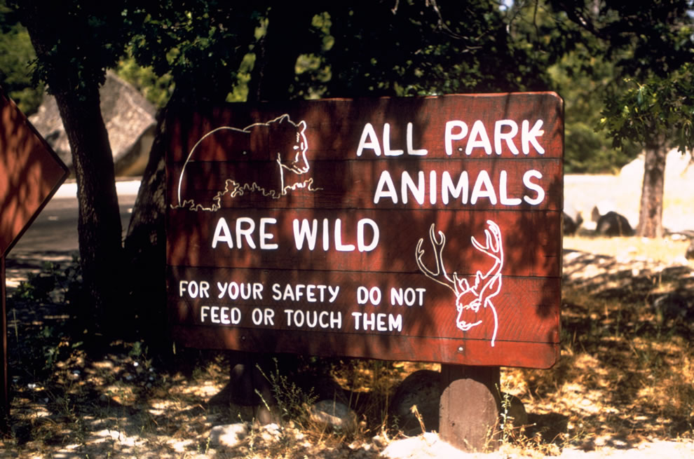 Yellowstone sign warning that all park animals are wild - do not touch