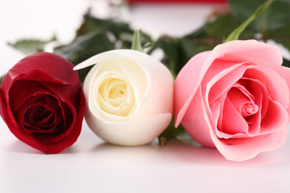 A white rosebud is symbolic of girlhood, while a red rosebud is symbolic of purity and loveliness