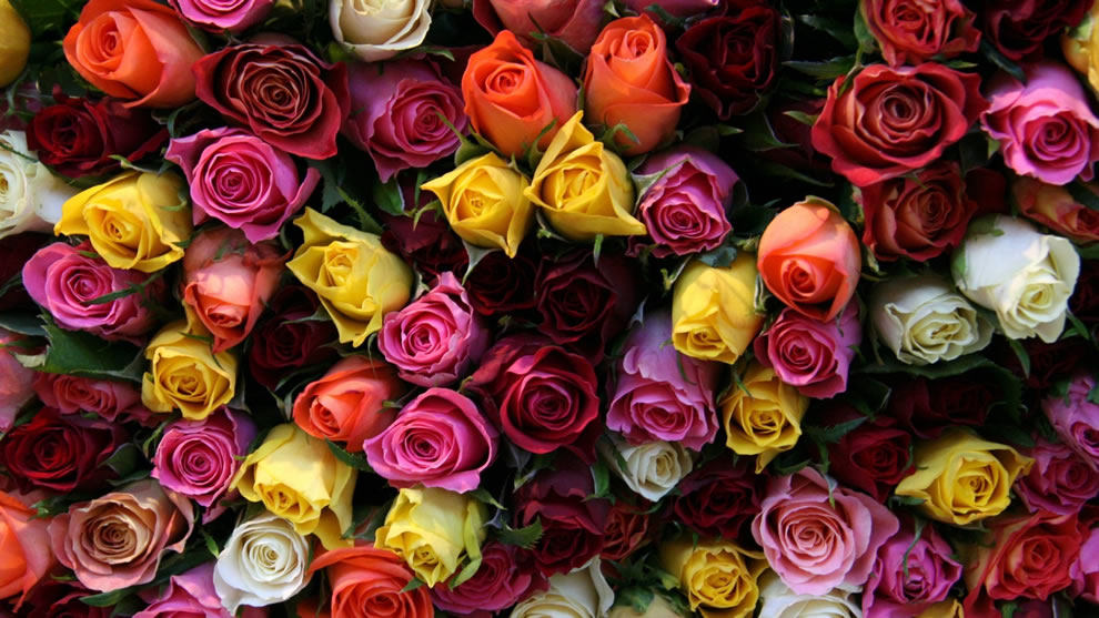 Beautiful multicolored bouqet of roses for you, Happy Valentine's Day
