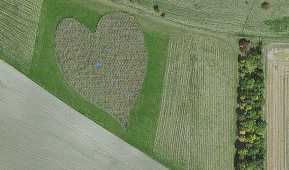 Heart-shaped woods in Oare, England