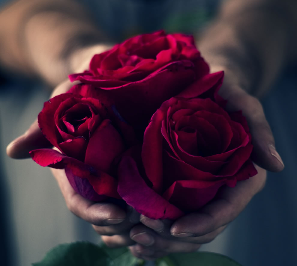 One single red rose shows love; a dozen red roses show gratitude. 25 red roses mean congratulations and a bouquet of 50 red roses show unconditional love