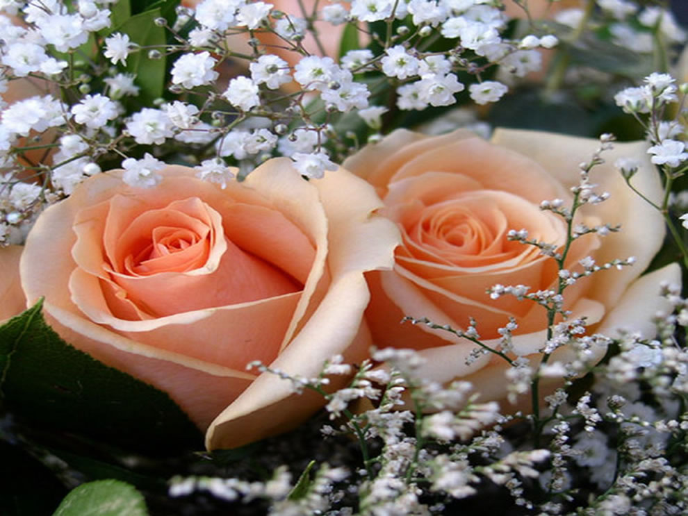 Peach roses can mean appreciation, closing the deal, let's get together, sincerity, gratitude