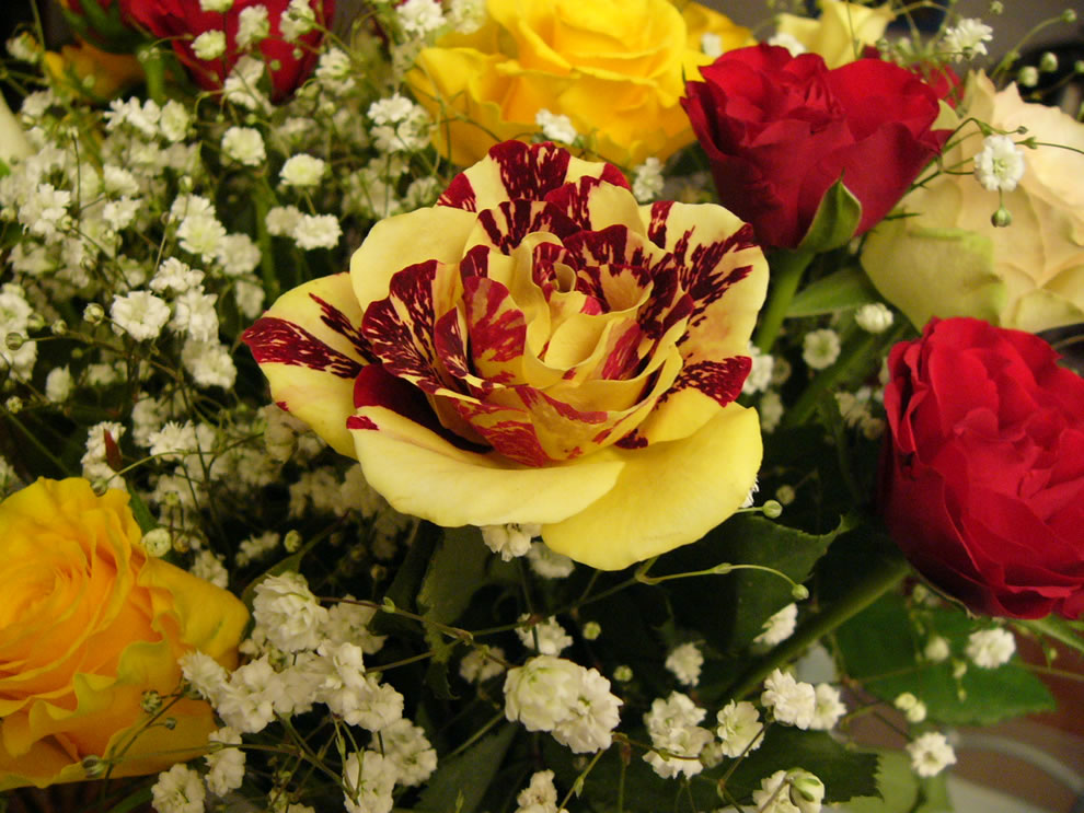 Red and yellow roses symbolize jovial and happy feelings