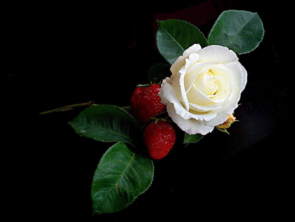 White rose and strawberries