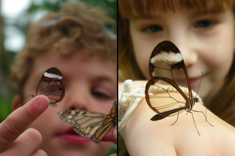 Future butterfly whisperers with glasswing butterflies