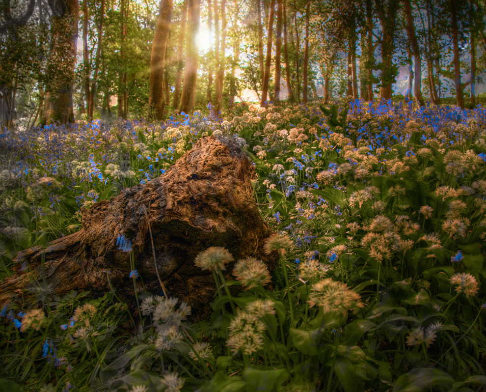 Bluebell Woods on Stamford Hill in Stratton Cornwall