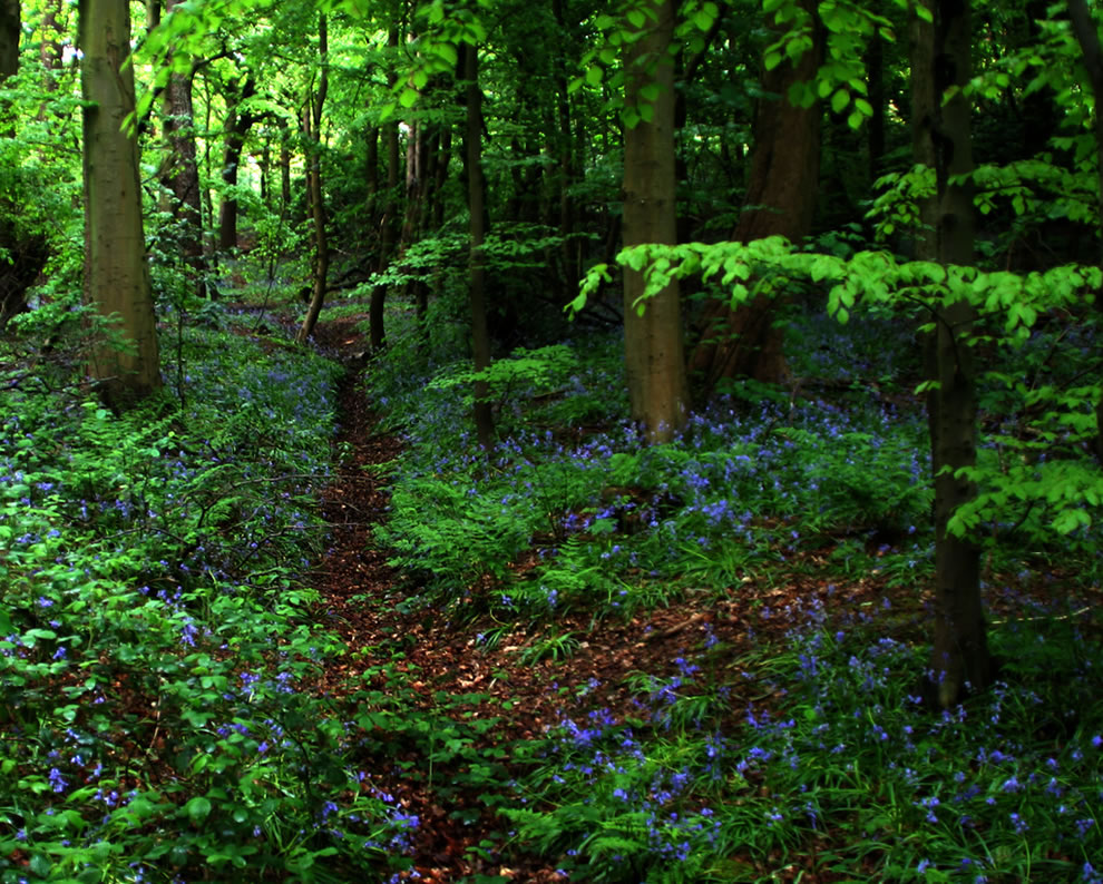Bluebells and Silent eloquence in Glasgow Scotland