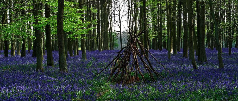 Bluebells and Spring at Ashridge Forest