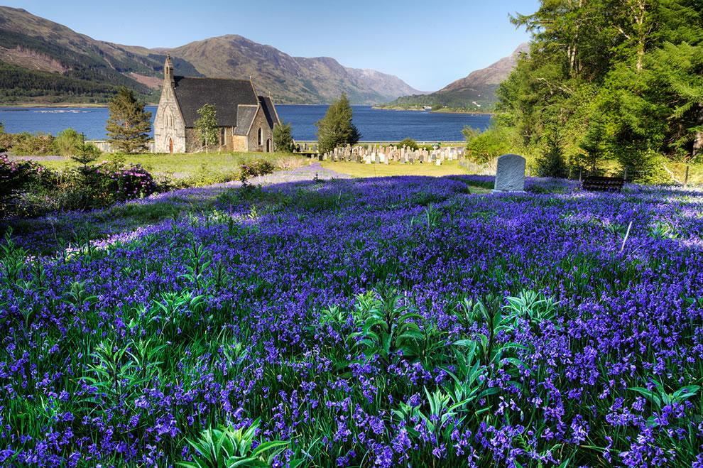 Bluebells at Ballachulish, Scotland