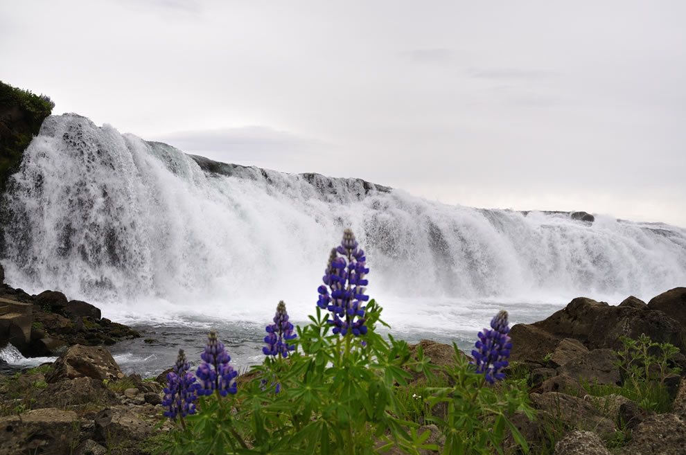 Faxi waterfall in southern Iceland during summer, June