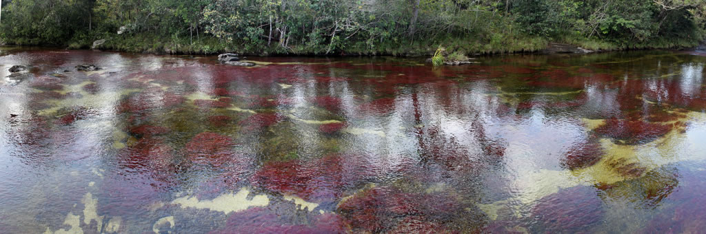 Panorama of the unique biological wonder of Cano Cristales, the river that ran away from paradise'