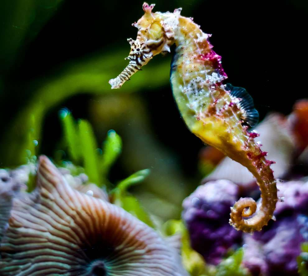 Rainbow-colored seahorse