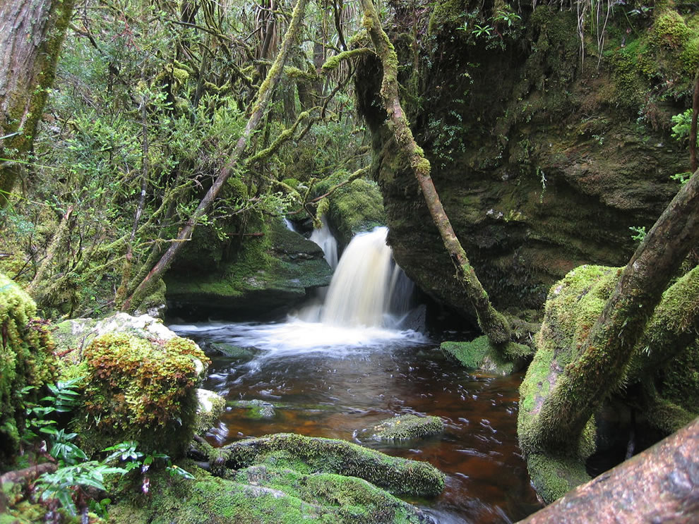Tasmanian Wilderness World Heritage Area, flowing through the forest, waterfall near Frenchman's Cap