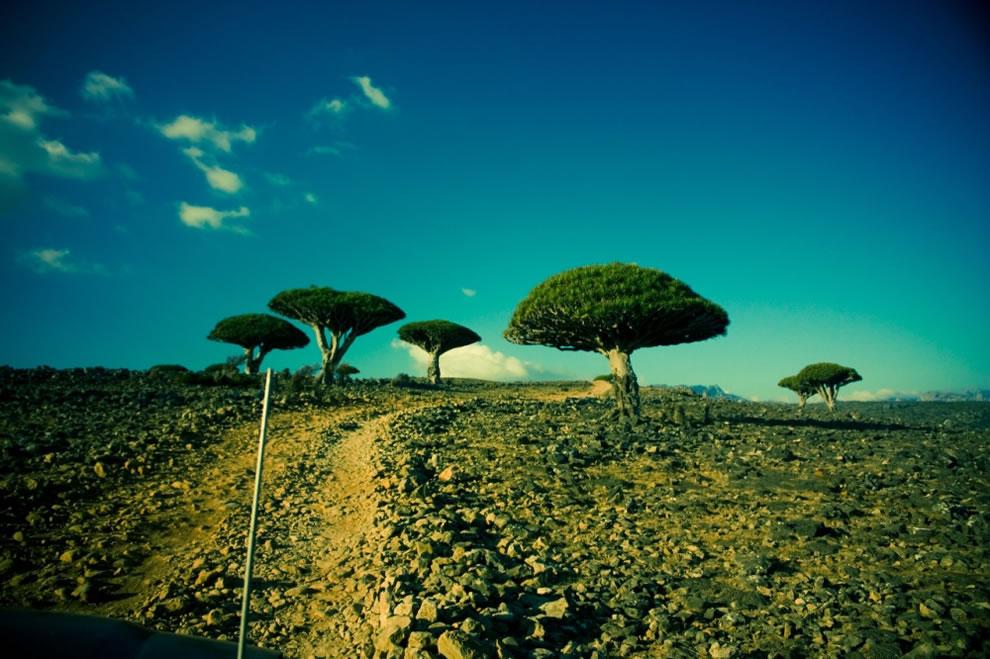 Dicksam plateau to Wadi Daerhu, Socotra