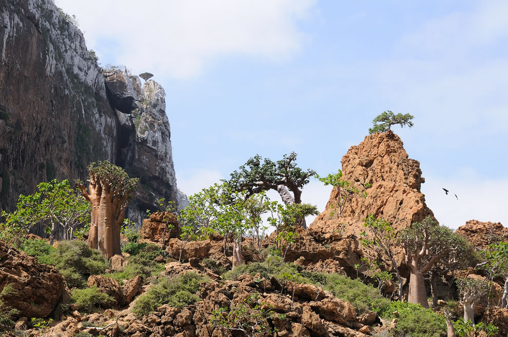 In 2008,Socotra became a UNESCO World Heritage Site