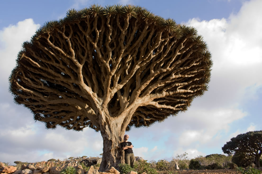 Otherworldly trees and most alien landscape on Earth