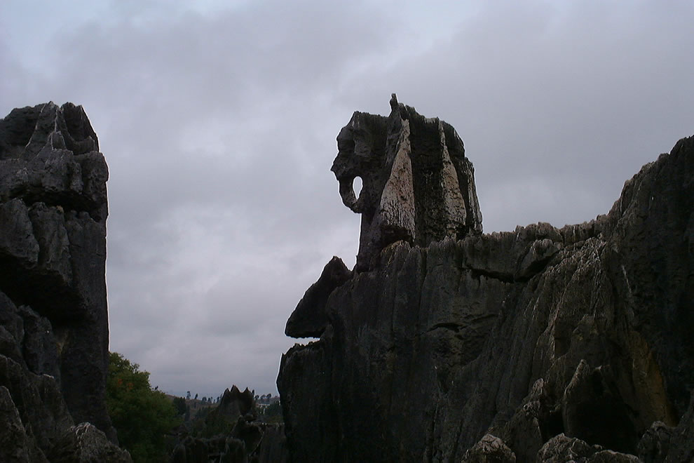The elephant in the Stone Forest