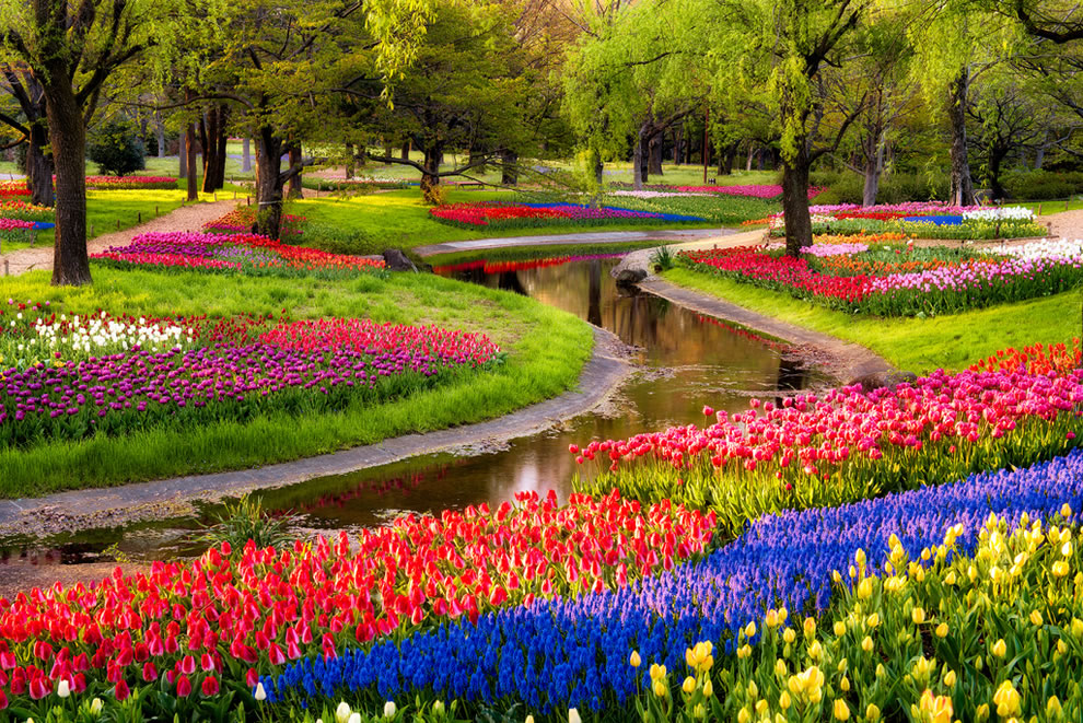 Tulips at Serpent Garden in Japan