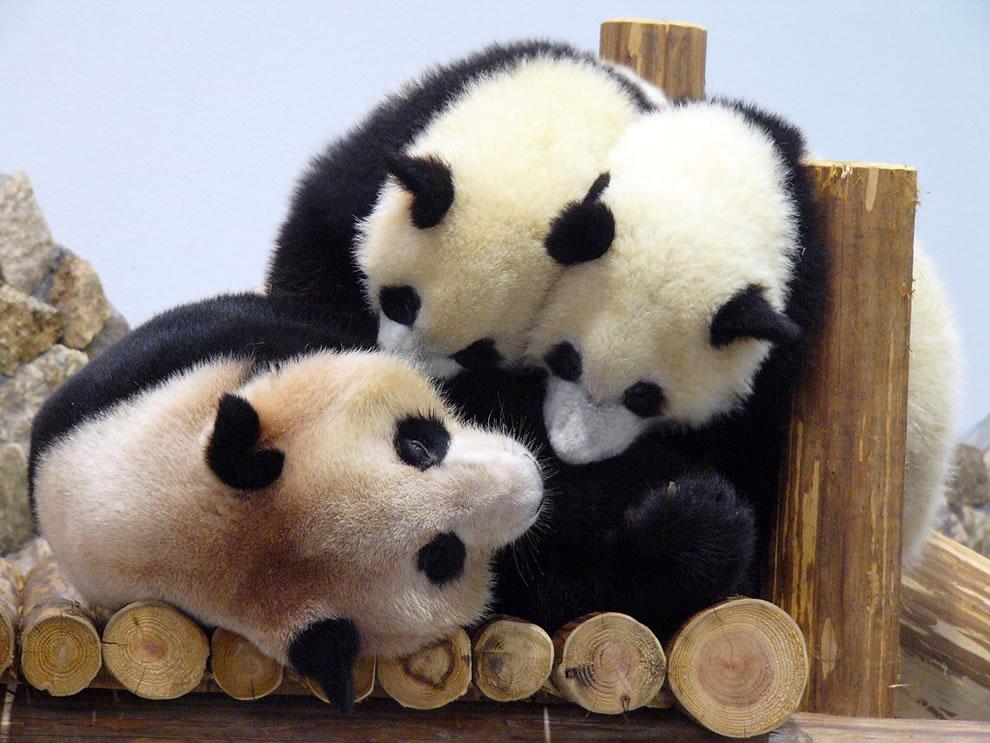 Twin pandas jumping on mom