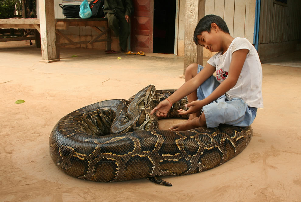9 year old boy keeps a 5 meter long python snake as his pet