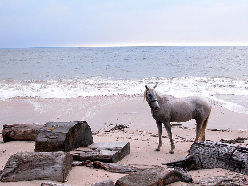 Horse at Estuary of Libreville, near Hippopotami Bridge