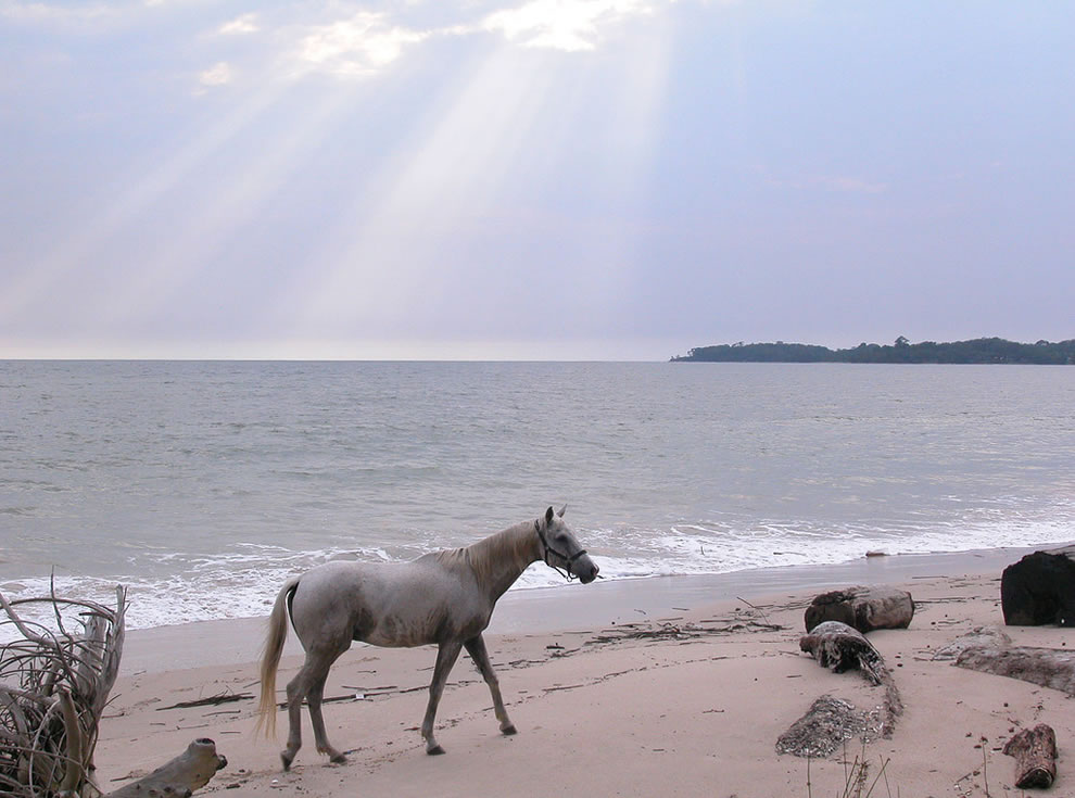 Sea horse and sunshine in Africa