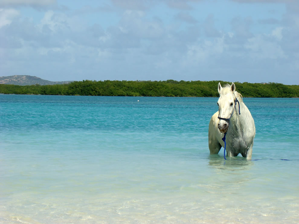 Sea horse at Lac Bay - Bonaire, Netherlands