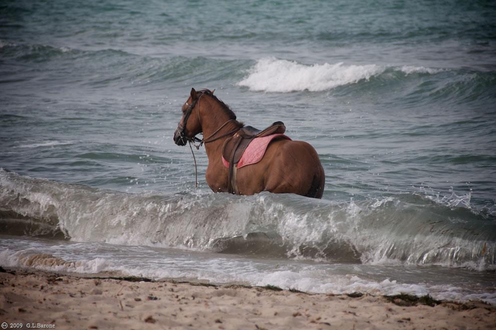 Spirit Horse Of The Cherokee
