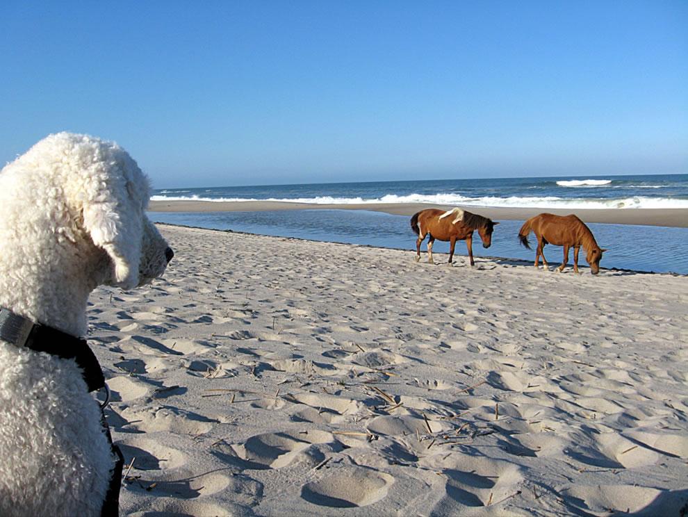 Wild Horses, Tame Dog