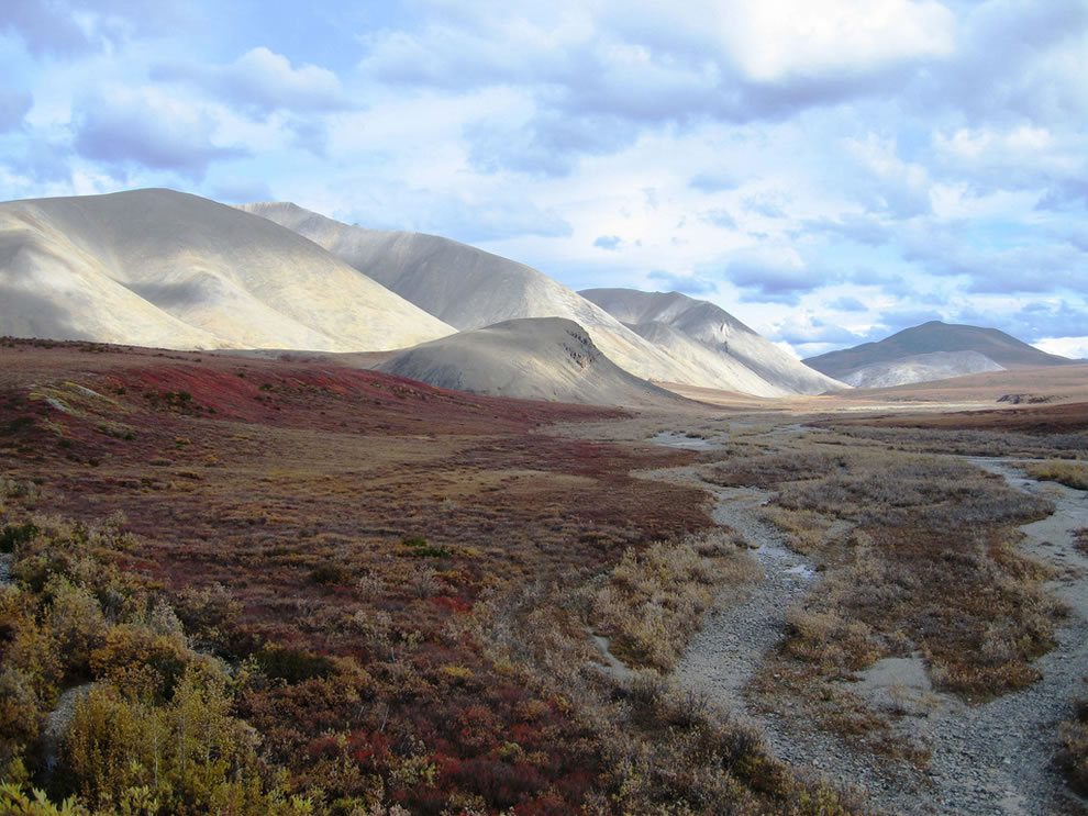 Autumn at Kobuk Valley National Park near Kobuk sand dunes