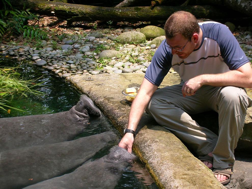 Hand feeding manatees