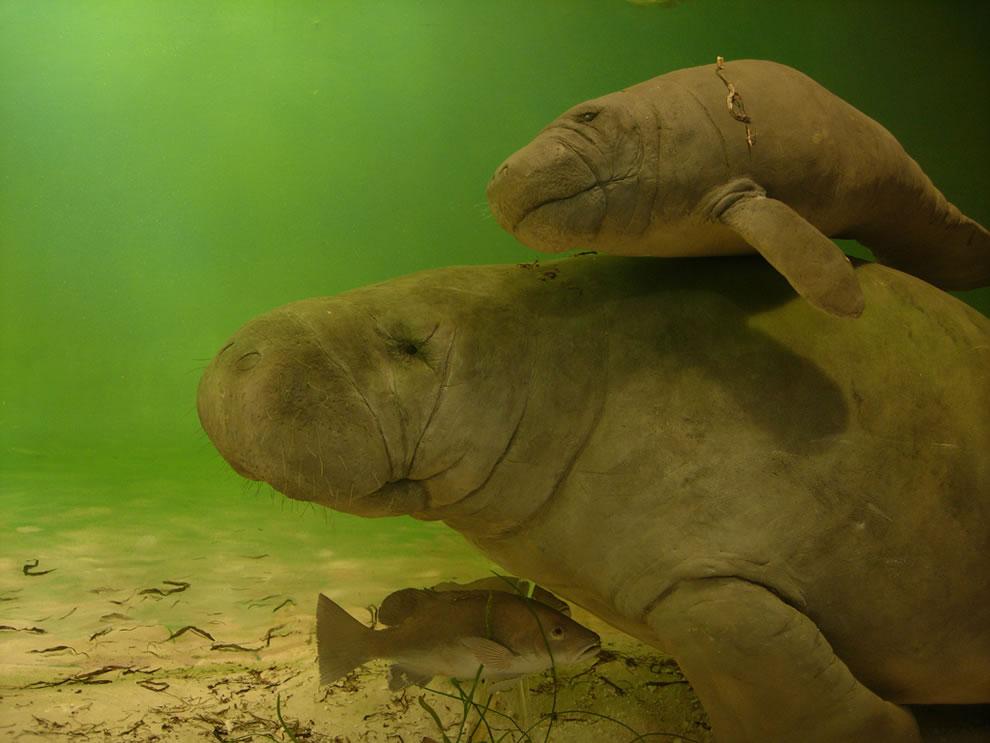 Parker Manatee Aquarium, Bradenton, FL
