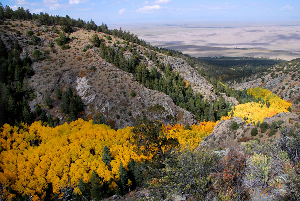 River of aspen trees and Morris Gulch at Great Sand Dunes National Park and Preserve