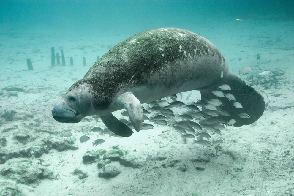 Underwater photography of fish and manatee